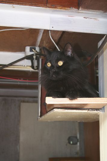 Bosco on metal shelf beneath wheelhouse