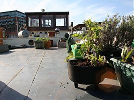 Geranium and main spring garden deck